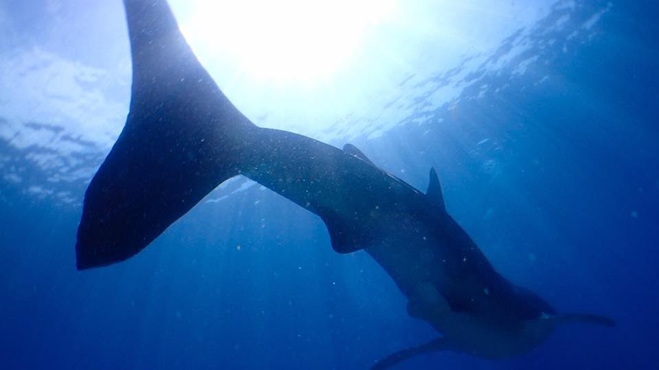 【初心者・お一人様OK】 沖縄のダイビングなら SimplyBlue